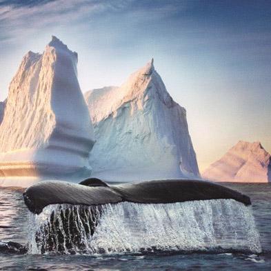 【5日游】纽芬兰赏冰山看鲸鱼观海鸟非凡体验 $599 CAD/人 周周发团
