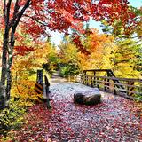 【2日游】布雷顿高地公园逐枫者之旅2日游 $149/人 1人成团 周周出发